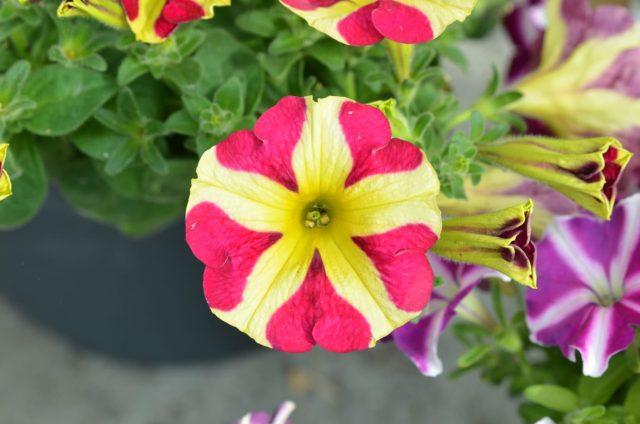 nya spännande utplanteringsväxter