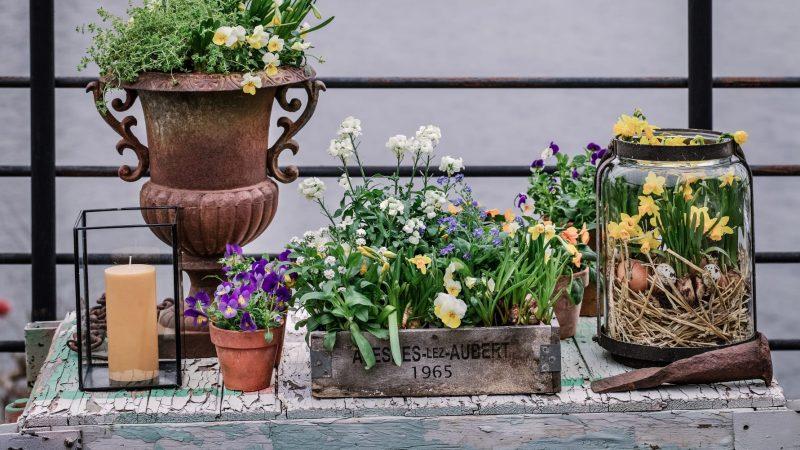 Bli glad av vårblommor